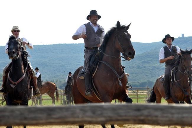 cavalli-maremmani-butteri-maremma_650x435