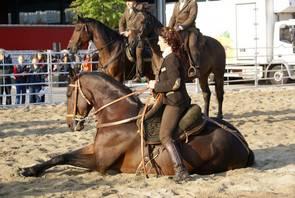 cavallo-maremmano-da-lavoro