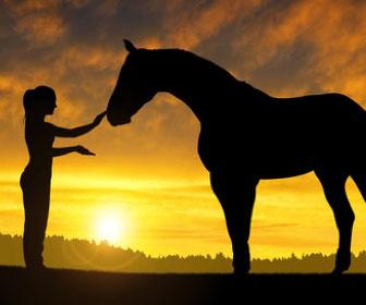 cavallo-maremmano-la-doma-salire