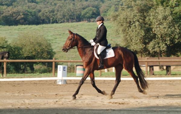 cavallo-maremmano-performance-salto